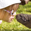 Child Safety and Pets